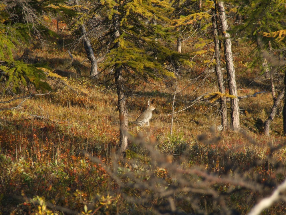рачком в лесу